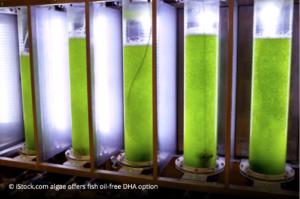 micro algae omega 3